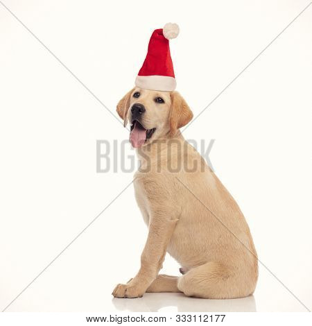 poster of side view of a seated little labrador retriever santa claus puppy panting on white background