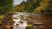 The River Allen Flows Through Allen Banks, And Staward Gorge In The English County Of Northumberland poster