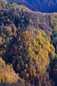 Aerial View Of Sunlit Slopes Of Beautiful Mixed Forest In Vibrant Colors Of Autumn. Forestry, Nature poster