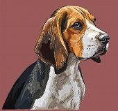 Colorful Beagle Vector Hand Drawing Portrait. Isolated Vector Illustration On Maroon Background. Vec poster