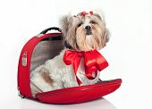 Furry Dog In A Bag poster