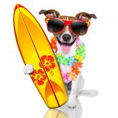 picture of hawaiian flower  - silly funny surfer dog with fancy surf board and flower chain - JPG