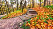 Beautiful colorful autumn picturesque park in sunny day with country rural road scenic. Fresh dimini
