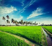 Vintage retro hipster style travel image of rural Indian scene - rice paddy field and palms. Tamil N