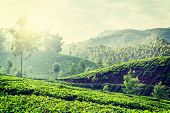 Vintage retro hipster style travel image of Kerala India travel background - green tea plantations i