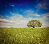 Vintage retro hipster style travel image of   grass field meadow scenery lanscape under blue sky wit
