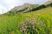 wild flowers in mountains on rock background