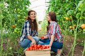 stock photo of picking tray  - Young smiling agriculture woman worker in front and colleague in back and a crate of tomatoes in the front - JPG