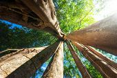 stock photo of rainforest  - Amazing sunny day at rainforest with giant banyan tropical tree and sunbeams - JPG