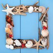 image of driftwood  - Sea shell selection and driftwood forming a frame over wooden blue background - JPG
