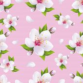 picture of sakura  - Beautiful light background seamless pattern with white sakura blossom  - JPG