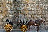 image of carriage horse  - vintage carriage with a horse, close up