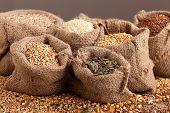 stock photo of flax seed  - Row healthy grain food  - JPG