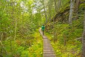 picture of wilder  - Hiking into a Green Wilderness on the Orphan Lake Trail in Lake Superior Provincial Park - JPG