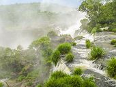 picture of jungle  - Iguassu waterfall in south america tropical jungle with a massive flow of water - JPG