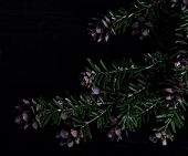 picture of pine cone  - Pine bough with pine cones on black wood background - JPG