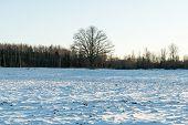 pic of snowy-road  - country snowy road in winter rural area - JPG