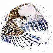 stock photo of snowy owl  - snowy owl T - JPG