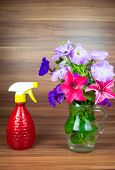 pic of petunia  - Colorful petunia blooms in a glass pitcher with watering can - JPG