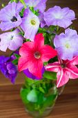 image of petunia  - Colorful petunia blooms in a glass pitcher