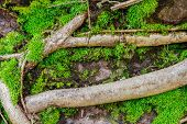 foto of debonair  - Texture design with moss for decorate project - JPG