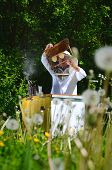 stock photo of inspection  - Experienced senior apiarist making inspection in apiary in the springtime - JPG