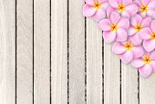 image of frangipani  - Pink frangipani flower on grey wooden plank background and texture - JPG