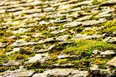 picture of stone floor  - Old grunge concrete stone floor with moss pattern background outdoor - JPG