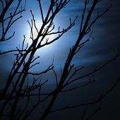 pic of moon silhouette  - Full moon in foggy dark night naked leafless trees silhouettes and clouds halloween theme background scary moonlight scenery - JPG