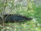 Aligator crocodile croc crocodile tail poster