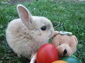 Постер, плакат: Пасхальный заяц с Медведь препятствуют и цветные яйца в нем 2