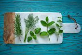 Aromatic herbs culinary plants rosemary fennel oregano mint and basil on turquoise wood poster
