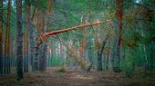 Beautiful Landscape. A Calm, Idyllic Picture Of An Autumn Coniferous Forest. Atmospheric Photo poster