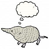 foto of shrew  - cartoon shrew - JPG