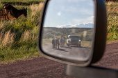 Looking Into A Side Mirror Of A Vehicle To See A Family Of Donkeys Walking Down The Road Next To A V poster