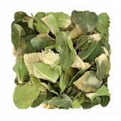 Kaffir lime leaf herb used in herbal medicine used for oral health, boost skin health, detoxify the  poster