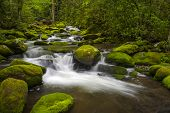 stock photo of backwoods  - Great Smoky Mountains National Park Gatlinburg TN Roaring Fork River lush green forest landscape photography - JPG