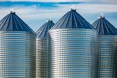 Modern And Clean Bulk Grain Storage Silos Are Seen On A Large Farm In Alberta, Canada. Stockpile Of  poster