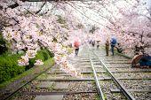 People Enjoy Spring Season At Keage Incline With Sakura (cherry Blossoms) In Kyoto, Japan. Japan Tou poster