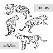 Tigers Wild Cat Vector Set. White Bengal Tiger Animals Icons For Print Or Tattoo Design. Hand-drawn  poster