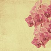 Textured Old Paper Background With Magenta Phalaenopsis Orchid