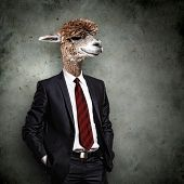 image of dromedaries  - Portrait of a funny camel in a business suit on a gray background - JPG