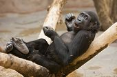 pic of funny animals  - playful monkey sits on tree and eats nuts - JPG