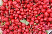 image of radish  - Radishes as a Healthy and Nutritious Vegetable - JPG