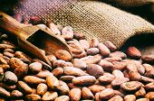stock photo of cocoa beans  - Cocoa beans and wooden scoop - JPG