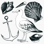 pic of albatross  - Vector collection of hand drawn sea illustrations - JPG