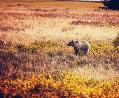 stock photo of grizzly bear  - Grizzli  bear in autumn season - JPG