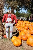 image of scarecrow  - Scary scarecrow on a pumpkin patch - JPG