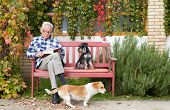 stock photo of mans-best-friend  - Senior man reading book in courtyard while dogs making his company - JPG