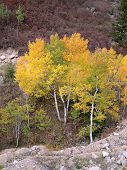 Looking Down On Aspens